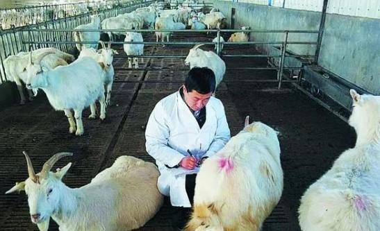 2021年宜品乳业接连放出大动作,品牌竞争力进一步强化